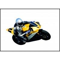Muelles para motocicletas